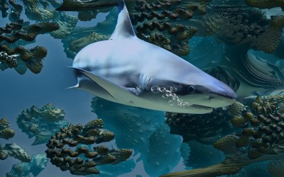 Clever Buoys: Shark-detecting tech to patrol Aussie beaches